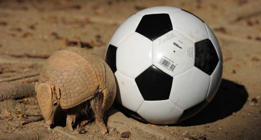 FIFA World Cup 2014-ын бэлэгдэл амьтан хуягт зараа Фулеко