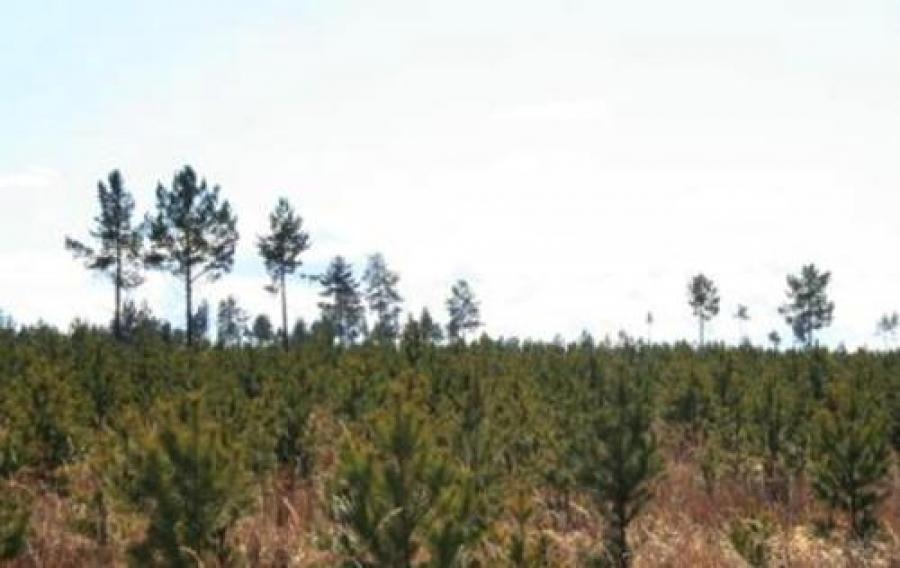 2005 оноос хойш суулгасан таримал ойн амьдралт туйлын хангалтгүй байна