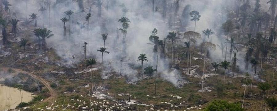 Амазоны ширэнгийн голд цамхаг барина