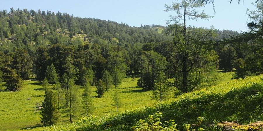 Ой модны салбарын 90 жилийн ой тохиож байна