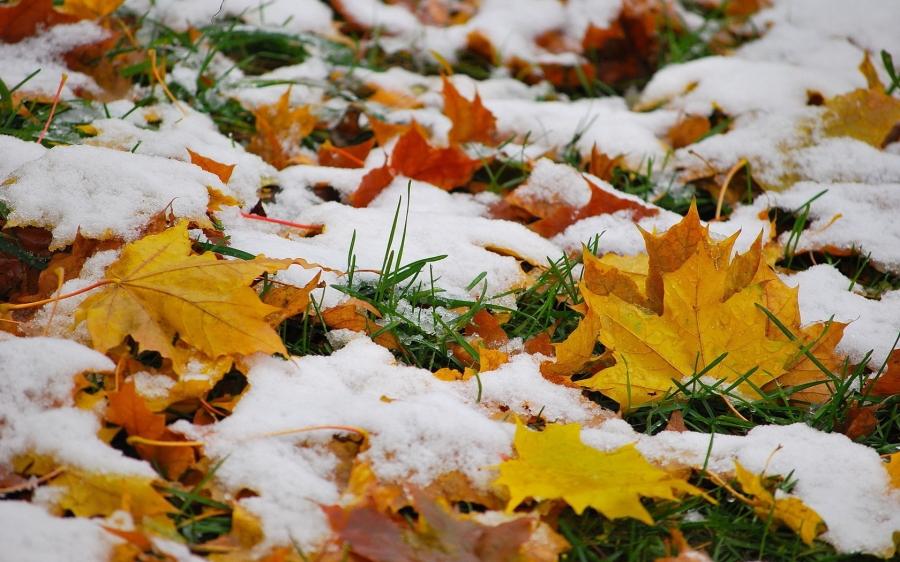 Өнөөдөр нутгийн хойд хэсгээр нойтон цастай