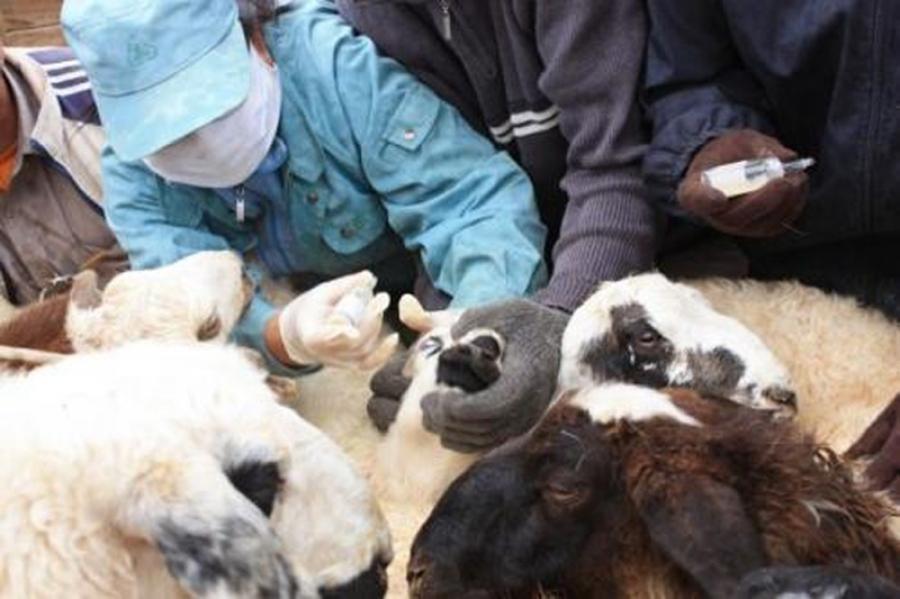 Мялзан өвчний вакцинжуулалтад  495.8 сая төгрөг зарцуулна