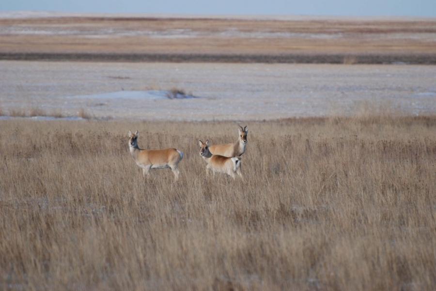 Монгол Дагуурын Дархан цаазат газрыг Юнескогийн дэлхийн өвд бүртгүүлнэ