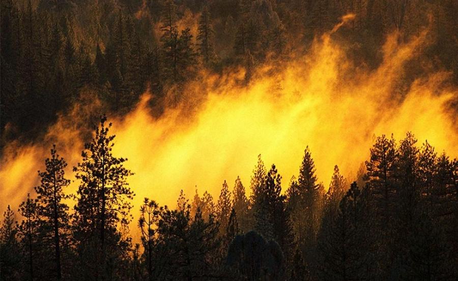 Нийслэлийг утаанд автуулсан гал түймрийн 80 хувь нь иргэдийн буруутай үйл ажиллагаанаас дэгджээ