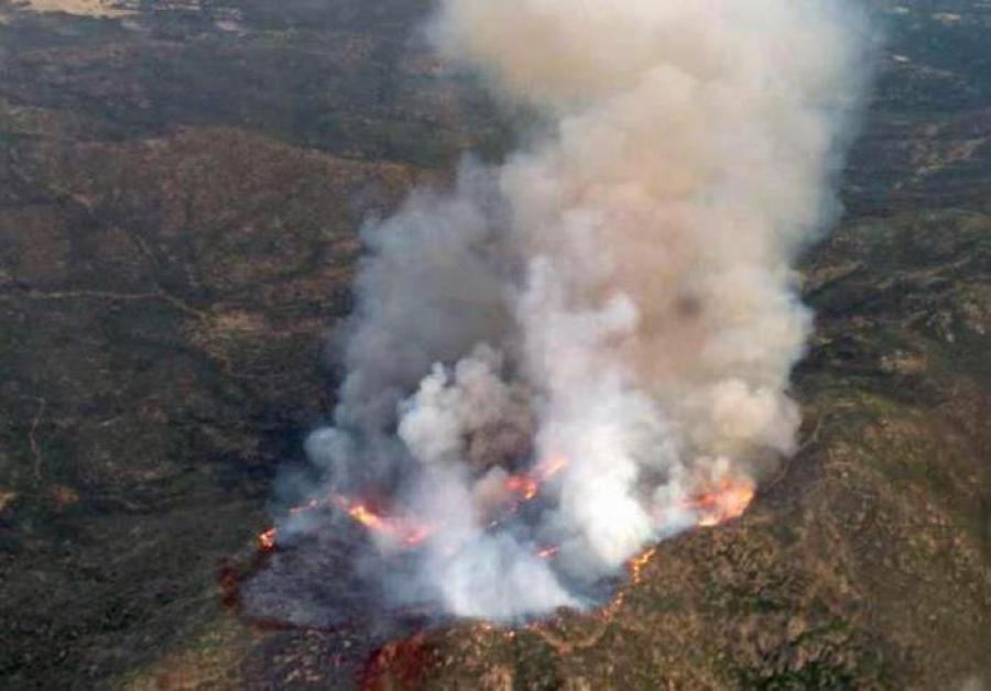 71 түймрийн эзэн холбогдогчийг тогтоож, хуулийн хариуцлага хүлээлгэжээ