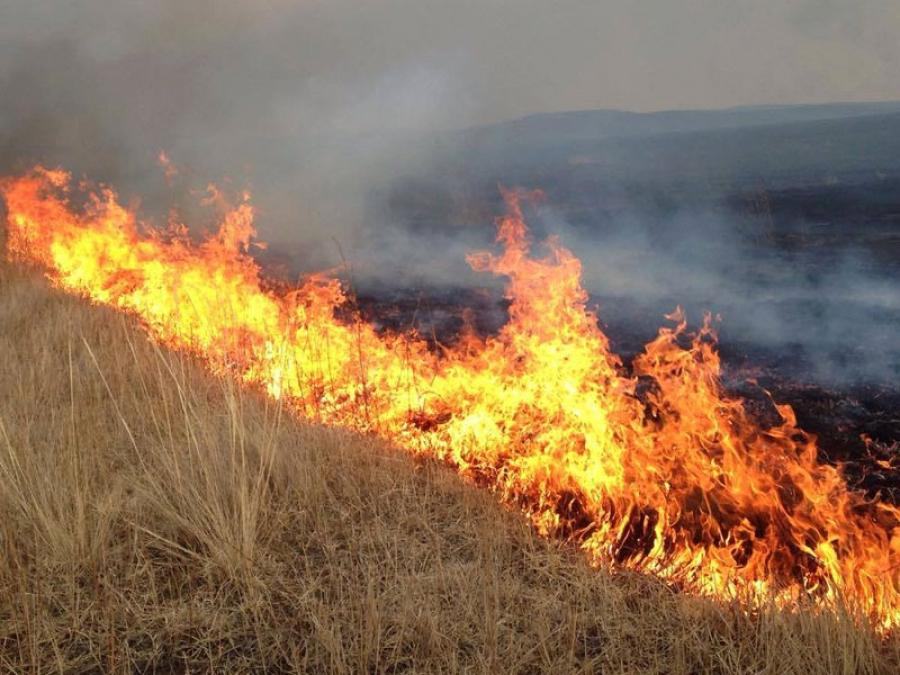 Дорнод, Сэлэнгэ аймагт гарсан хээрийн түймрийг унтраажээ