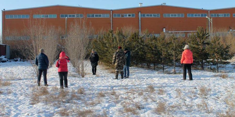 Хотын ногоон байгууламжийг гоёл чимэглэлийн моддоор өргөжүүлнэ