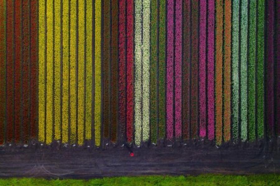 ФОТО: Алтанзул цэцгийн талбай
