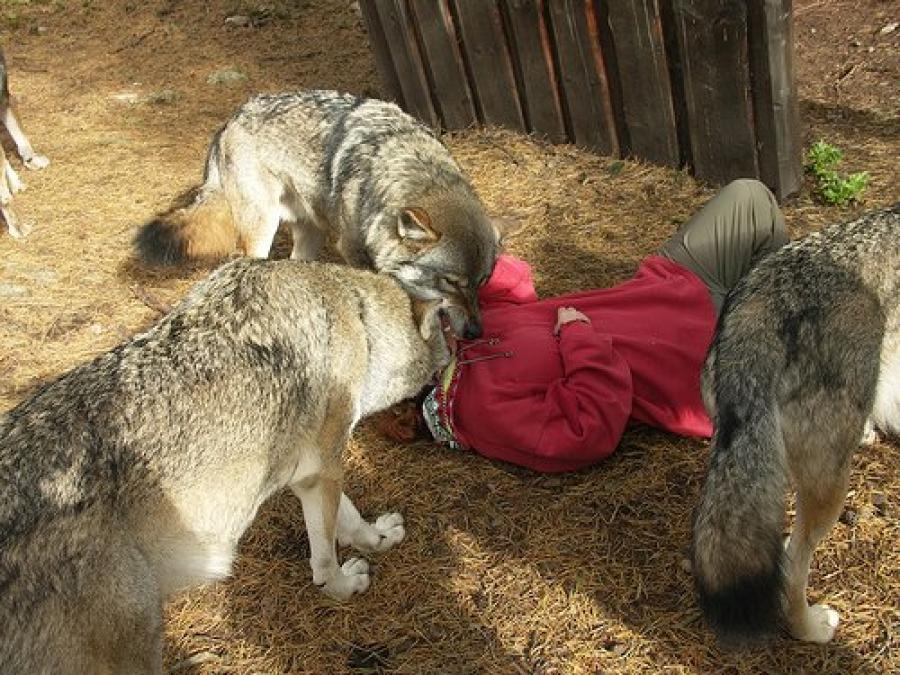 Мал, амьтны галзуу өвчнөөс сэрэмжлүүлж байна