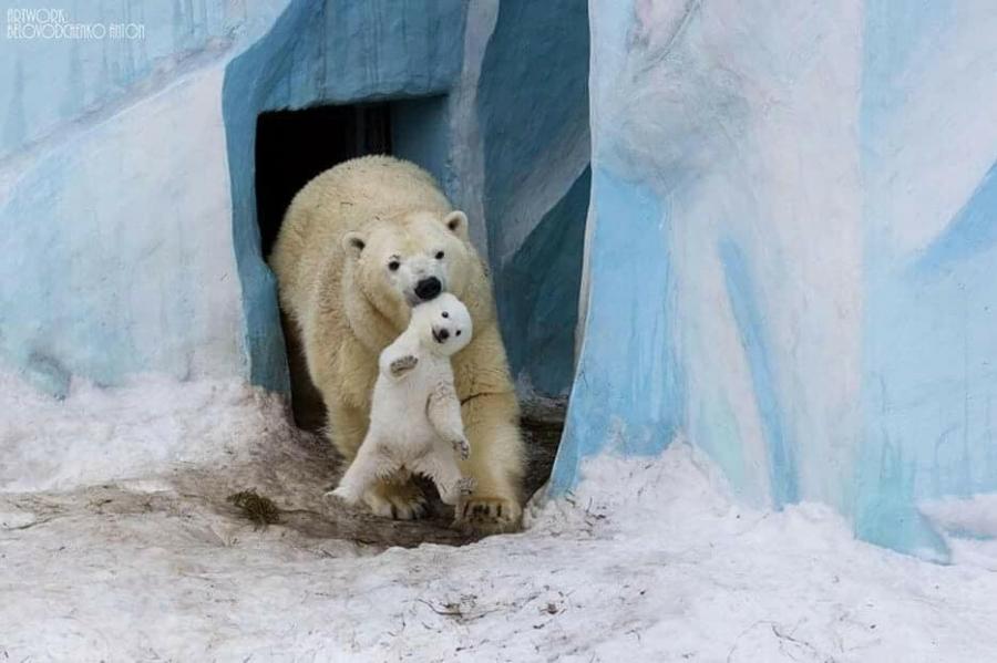 Хайр шүү дээ...Амьтны үр...ангирын зулзага