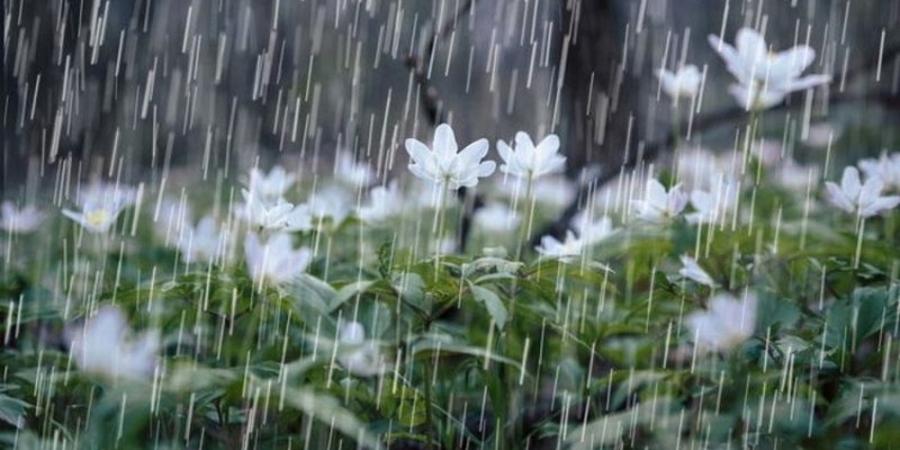 Өнөөдөр Алтай, Хангай, Хөвсгөлийн уулархаг нутгаар түр зуурын бороо орно
