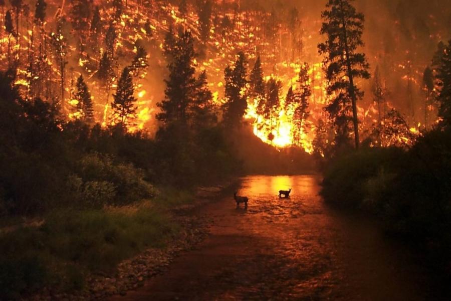Сибирийн түймрийн хамрах хүрээ багасчээ