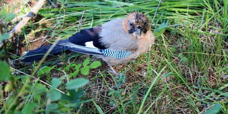Нийслэлийн нутаг дэвсгэрт 227 зүйл шувуу бүртгэгдсэн