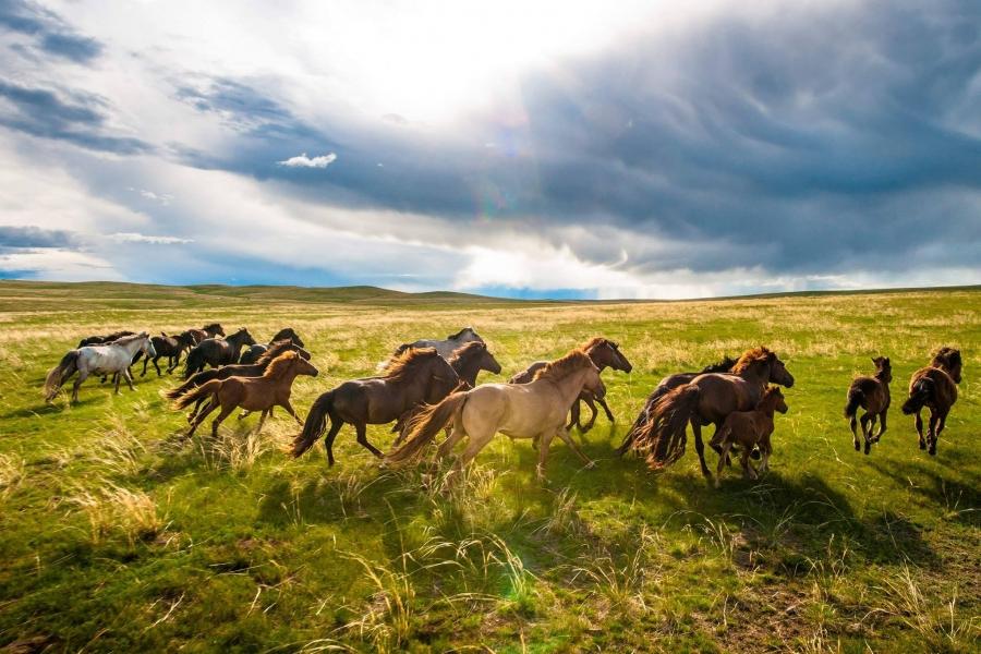 Монгол Улс адууны тоогоор дэлхийд дөрөвдүгээрт жагсдаг