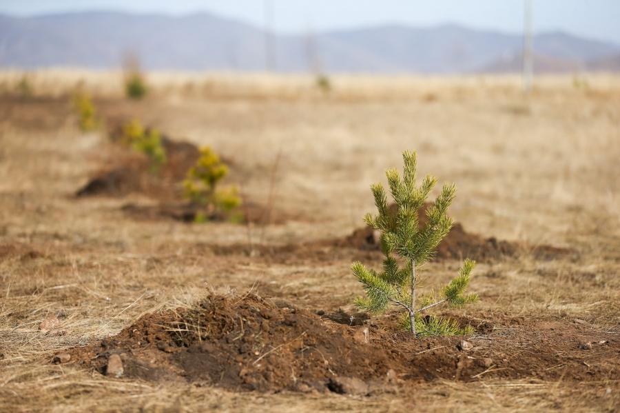 """""""Тэрбум мод"""" үндэсний хөдөлгөөнд 320 орчим байгууллага, аж ахуйн нэгж нэгджээ"""