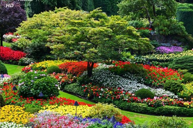 """""""Бучарт"""" цэцэрлэгт хүрээлэн"""