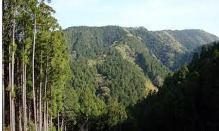 Монголын ой хичнээн тонн хүлэмжийн хийг шингээдгийг хэмжинэ