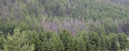 Нийслэлийн нутаг дэвсгэрийн ойгоос бэлтгэх модны хэмжээ 5760 м3 байхаар тогтоолоо