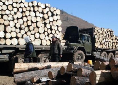 Хууль бусаар бэлтгэсэн 680 куб.метр модыг хураажээ