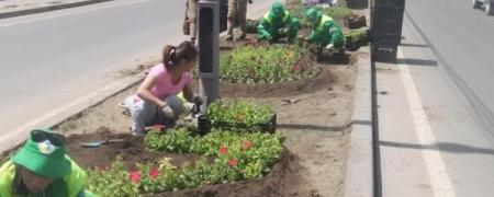 400 мянган м2 талбайн зэрлэг ургамлыг 8 сарын 20 гэхэд устгаж дуусна