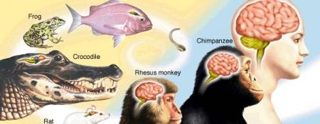 Шавж хорхой идсэний ачаар хүний тархины хэмжээ томорчээ