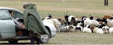 Наадмын хонь тарга, тэвээрэг наснаасаа хамаарч 100-250 мянган төгрөгийн үнэтэй байна