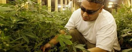 Нью-Йорк муж марихуан ашиглахыг хуульчиллаа