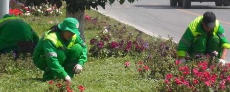 Нийслэлийн цэцэрлэгчдийг АНУ-д дадлагажуулахаар боллоо