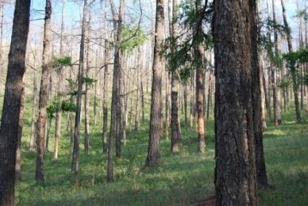 Богдхан ууланд ойн мэргэжлийн байгууллага цэвэрлэгээ хийж байна