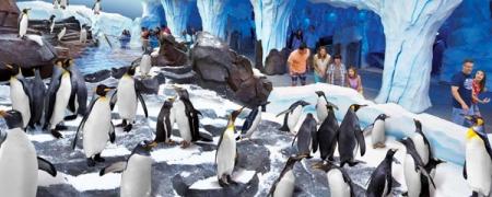 Пингвин хүний хэлээр ярьжээ
