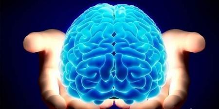 Хүний баруун тархи нь зүүн тархинаасаа 4.5 мм урт