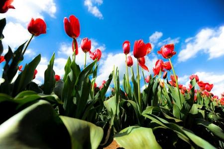 Гайхамшигт цэцэгсийн өнгө-1