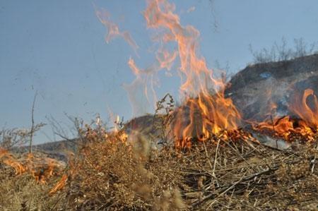 Хаврын хуурайшилтаас үүдэж ой хээрийн түймэр их гарч байна
