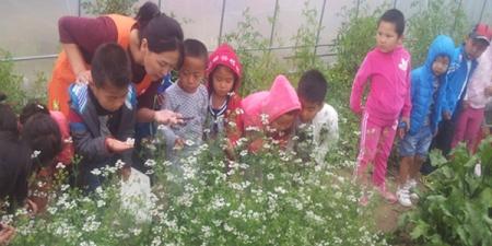 Цэцэрлэгийн хүүхдүүд ногоо тарьж байна