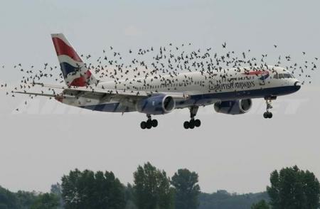 ФОТО: Нисэх онгоц шувуутай мөргөлдөхөд юу болдог вэ