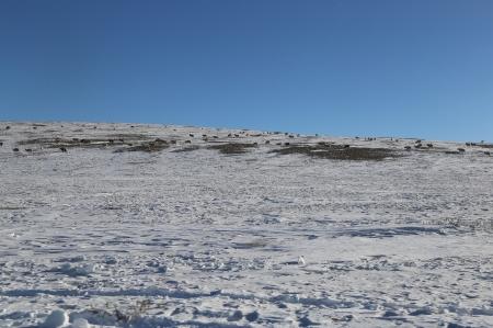 Нийт нутгийн 80 хувьд цасан бүрхүүл тогтжээ