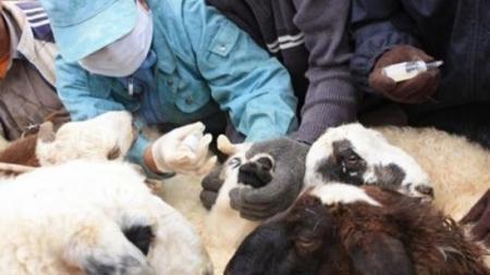 Шүлхий өвчнөөс сэргийлэх 4 сая тун вакциныг орон нутаг руу хүргүүлжээ