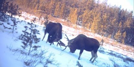 ФОТО: Зэрлэг амьтдын зургийг мэдрэгч камерын тусламжтай авчээ