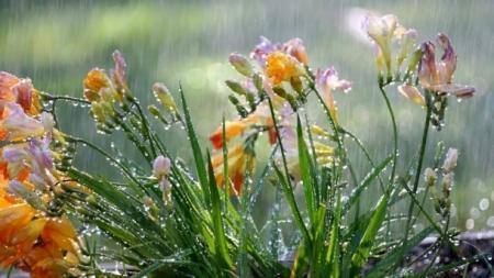Улаанбаатарт 25-27 хэм дулаан, бага зэргийн бороо орно