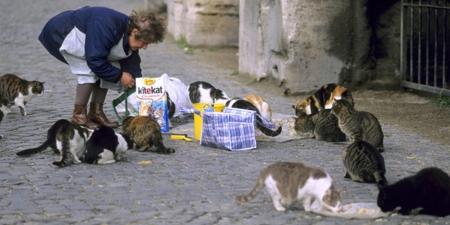 Тэнэмэл муур хооллосон эмэгтэйг шийтгэжээ