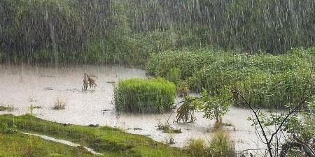 Өнөө маргаашдаа нутгийн зүүн хагаст бороо орж, сэрүүхэн байна