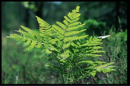 Ургамал, ойн дагалт баялаг ашиглахдаа хууль зөрчихгүй байхыг анхааруулж байна