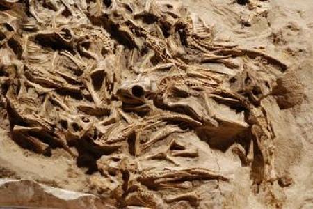 Палеонтологийн шинжлэх ухаанд өмнө нь мэдэгдэж байгаагүй, үлэг гүрвэлийн маш ховор зүйлийг нээлээ