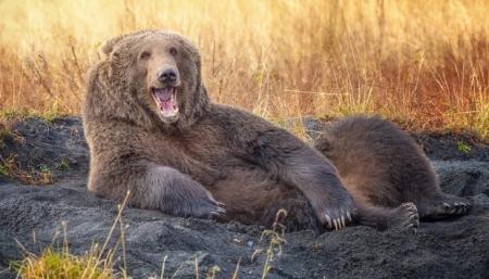 Амьтдын хөгжилтэй агшин гэрэл зургийн уралдааны шилдэг зургууд - 2021