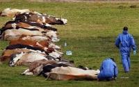 """""""Зооноз""""-ын өвчинд дарлуулсан Монголоос мах авахыг хүсэхгүй л болов уу"""