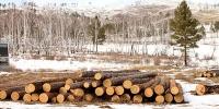Зургадугаар сарын 15-ны өдөр хүртэл мод бэлтгэхийг хориглов