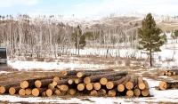 Их хэмжээний мод бэлтгэх эрх олгожээ