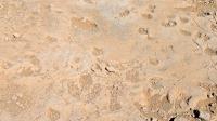 Шар цавын үлэг гүрвэлийн мөрийг дэлхийн өвд бүртгүүлэхээр хөөцөлдөж байна