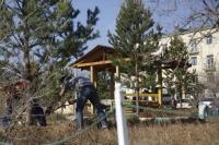 Хоёрдугаар эмнэлгийн урд талбайд нарс мод тарилаа