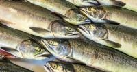 Тул загас худалдаалж байсан иргэнд эрүүгийн хэрэг үүсгэн, шалгана